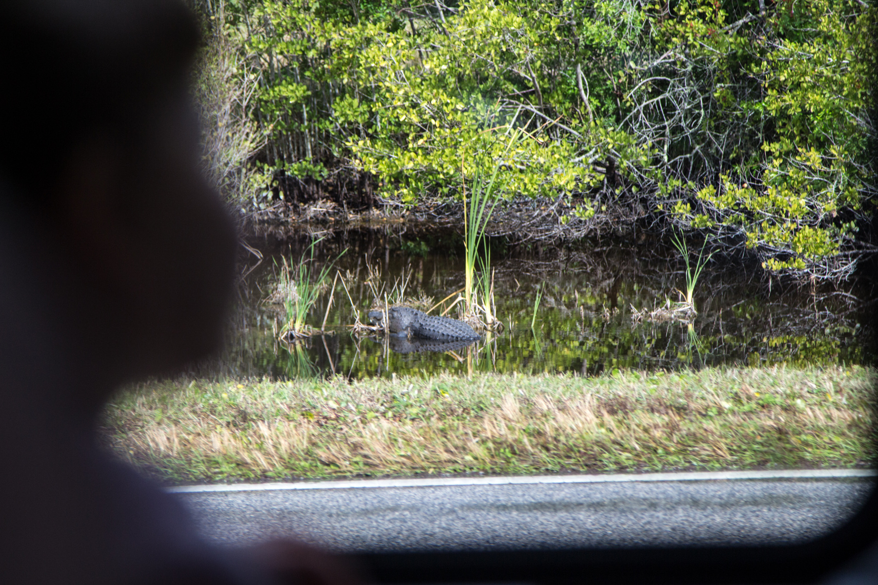 Már úton hazafelé, az utolsó képem Cape Canaveralről. Január vége volt, messze nem a főszezon; a buszok nagy része a parklóban pihent