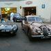 Jaguarok térnek nyugovóra