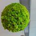 Ez pedig északi zuzmó. Az eladótér páratartalmából táplálkozik és kellemes mikroklímát biztosít