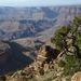 A Grand Canyon alján kanyarog a Colorado folyó