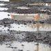 A 2013-ra tervezett 600 kilométeres hossz többszörösét kellene évente felújítani az országban