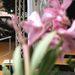 Tavaszi virág a neve az egyik megvásárolható illatpatronnak