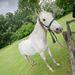 A Geréby kúria lovai megúszták a szállítást