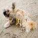 Bónusz kiskutya: egy hete dobták ki egy autóból a bekötőúton, a Geréby Kúriánál szabadon leigazolható